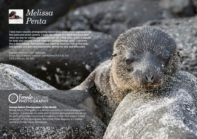 Female Nature Photographer of the Month - November 2018 - Melissa Penta