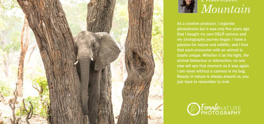 Shy Elephant