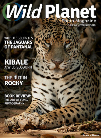 February cover Wild Planet Photo Magazine