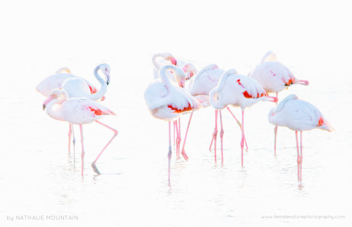 Flamingos - Colourful flamingos resting