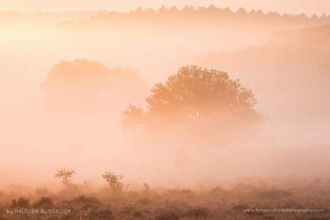Morning glow - September mornings can be amazing with low fog, Posbank, the Netherlands