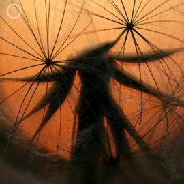 Portfolio carousel Jodie