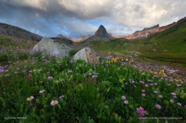 Summer flowers in one of Colorado's most spectacular high alpine basins