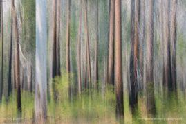 Yosemite woodland