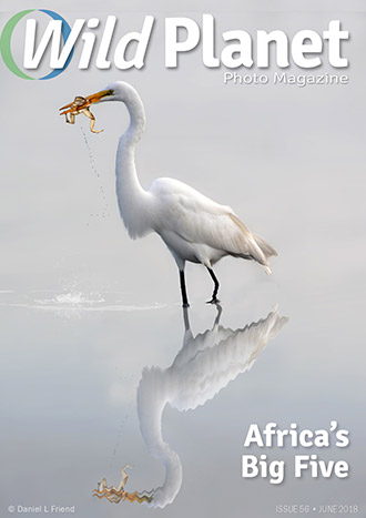 WPM_issue-56-cover