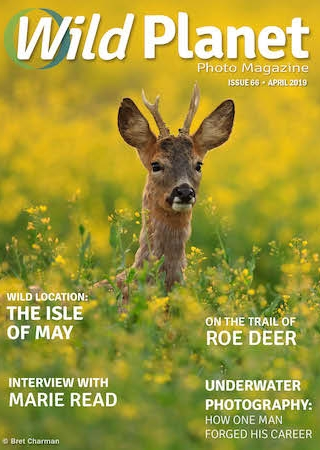 Wild Planet Photo Magazine April cover image